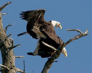 Fucking Eagles.